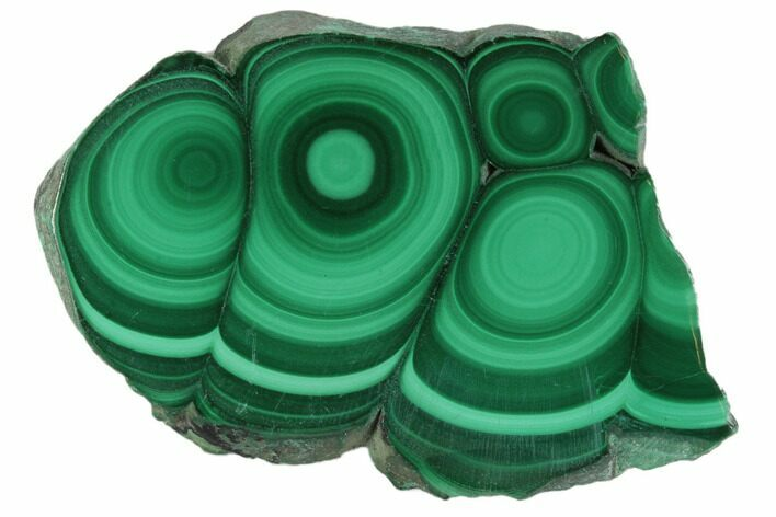 "1.8"" Polished Malachite Stalactite Slice - Congo"