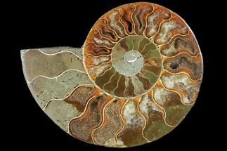 "Buy 4.25"" Agatized Ammonite Fossil (Half) - Agatized - #103090"