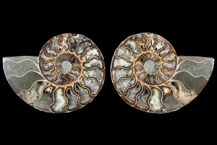 "4.35"" Cut & Polished Ammonite Fossil - Agatized"