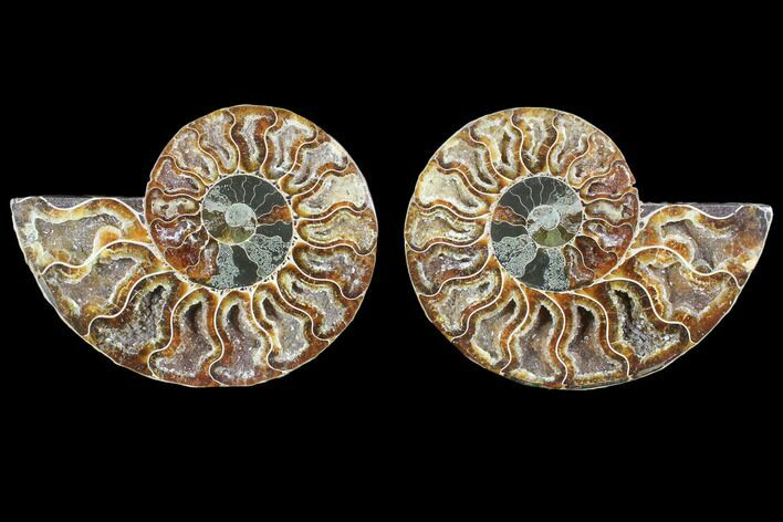 "4.3"" Cut & Polished Ammonite Fossil - Crystal Chambers"