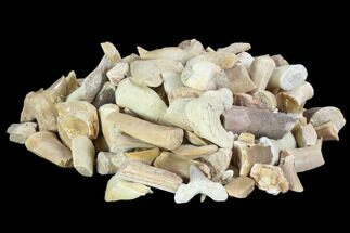 Buy Wholesale Box: Fossil Fragments (Shark, Mosasaur, Plesiosaur) - 22 lbs - #103525