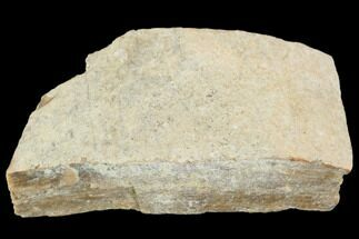 "1.3"" Hadrosaur (Maiasaura) Bone Fragment - Montana For Sale, #103199"