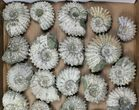 Lot: 5Kg Bumpy Ammonite (Douvilleiceras) Fossils - 26 pieces - #103216-1