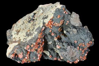 "Buy 3.3"" Red Vanadinite Crystals On Manganese Oxide - Morocco - #103600"