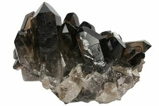 "4"" Dark Smoky Quartz Crystal Cluster - Brazil For Sale, #104084"