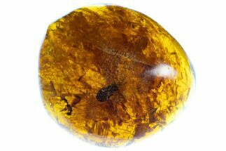 "Buy 1.3""  Polished Fossil Amber With Insect Inclusion (7 grams) - Mexico - #104278"