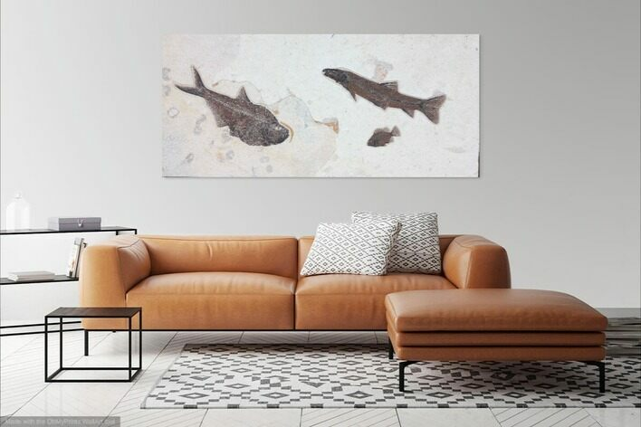 "43.5"" Wide Green River Fossil Fish ""Mural"" - Ready to Hang"