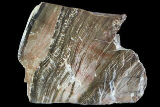 "5.8"" Petrified Wood (Araucioxylon) - Circle Cliffs, Utah For Sale, #104681"