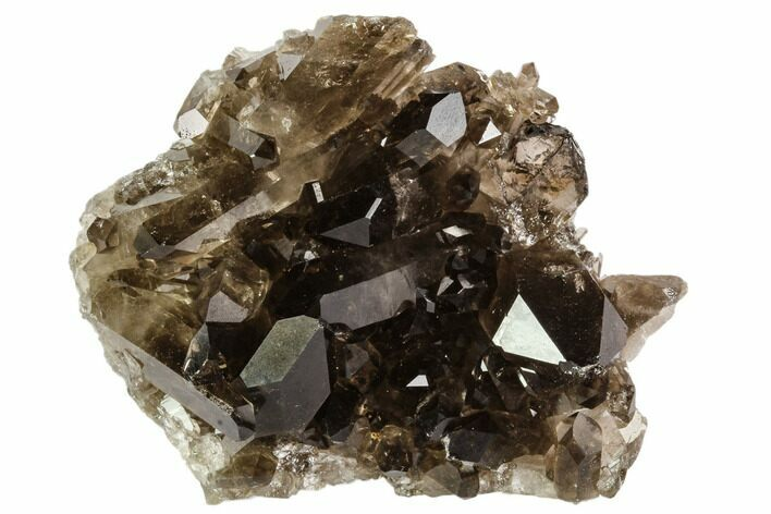 "2.6"" Dark Smoky Quartz Crystal Cluster - Brazil"