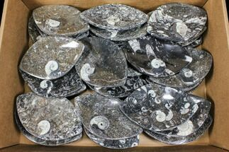 Buy Wholesale Lot: Fossil Goniatite Stoneware Dishes - 36 Pieces - #106723