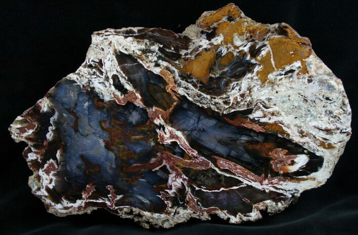 Thick Cut Hubbard Basin Petrified Wood Slab - 12""