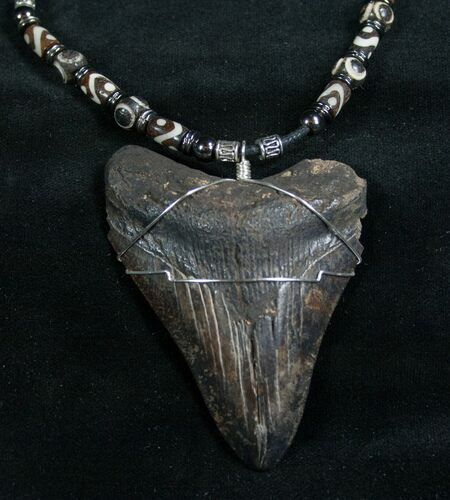 Big Ass Megalodon Tooth Necklace