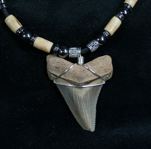 Serrated Megalodon Tooth Necklace - 1.7""