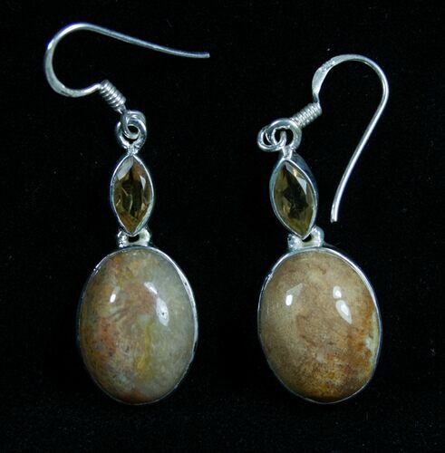 Fossil Coral Earrings