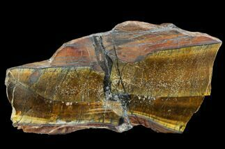 Tiger's eye - Fossils For Sale - #109272