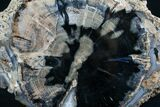 "Blue Forest Petrified Wood Slice - 5.6x4"" - #7634-1"