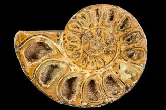 "3.1"" Sliced, Agatized Ammonite Fossil (half) - Jurassic For Sale, #110738"