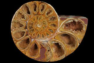 "3.2"" Sliced, Agatized Ammonite Fossil (half) - Jurassic For Sale, #110756"