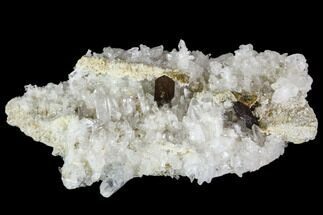 "Buy Beautiful, 3.9"" Brookite and Quartz Crystal Association - Pakistan - #111331"
