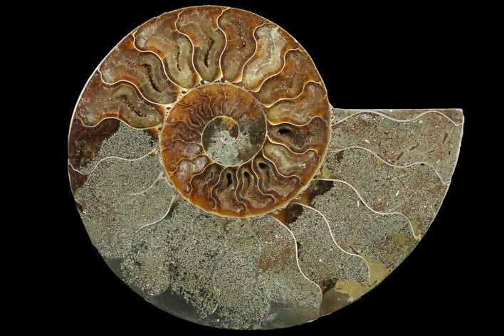 "Bargain, 5.9"" Agatized Ammonite Fossil (Half) - Madagascar"