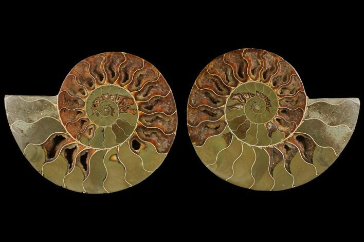 "5.0"" Agatized Ammonite Fossil (Pair) - Madagascar"