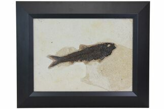 "Buy 8.1"" Framed Fossil Fish (Knightia) - Wyoming - #113275"