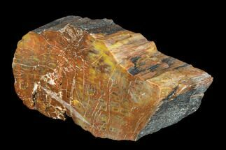"Buy 5.6"" Vibrantly Colored, Polished Petrified Wood Section - Arizona - #113359"