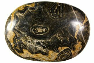 "2.7"" Polished Stromatolite (Greysonia) Pebble - Bolivia For Sale, #113510"