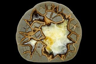 "5.2"" Polished Septarian Slab - Utah For Sale, #114359"