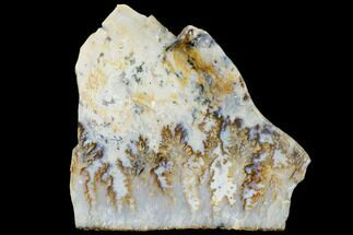 "Buy 7.1"" Graveyard Plume Agate Slab - Eastern Oregon - #114757"