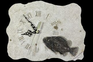 "Buy 11.1"" Wide Clock With Cockerellites Fish Fossil - Wyoming - #114313"