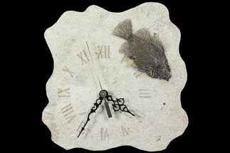 "9.3"" Tall Clock With Cockerellites Fish Fossil - Wyoming For Sale, #114323"