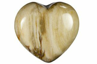 "1.6"" Polished, Triassic Petrified Wood Heart - Madagascar For Sale, #115511"