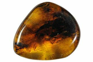 "1.4""  Polished Chiapas Amber (6 grams) - Mexico For Sale, #114773"