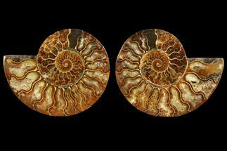 "Buy 3.75"" Sliced Ammonite Fossil (Pair) - Agatized - #116785"