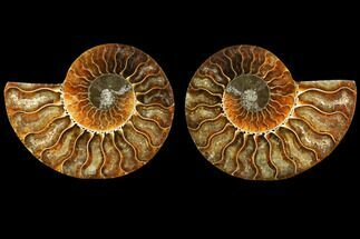"3.5"" Sliced Ammonite Fossil (Pair) - Agatized For Sale, #116789"