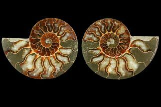 "Buy 3.95"" Sliced Ammonite Fossil (Pair) - Agatized - #116791"