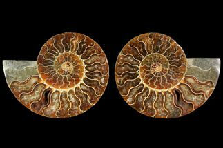 "5"" Agatized Ammonite Fossil (Pair) - Madagascar For Sale, #114857"