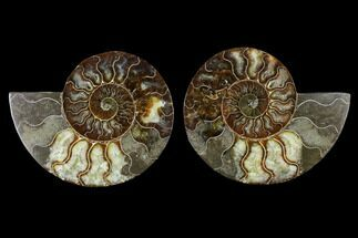 "Buy 5.45"" Sliced Ammonite Fossil (Pair) - Agatized - #115306"