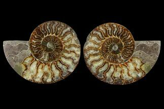 "Buy 5.2"" Sliced Ammonite Fossil (Pair) - Agatized - #115321"