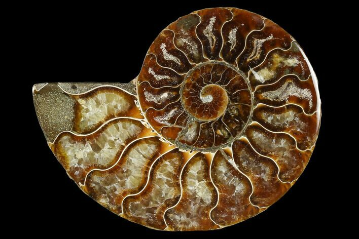 "4.1"" Agatized Ammonite Fossil (Half) - Madagascar"