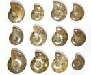 "Wholesale Lot: 3.3 - 4.6"" Polished Whole Ammonite Fossils - 18 Pieces - #116649-1"