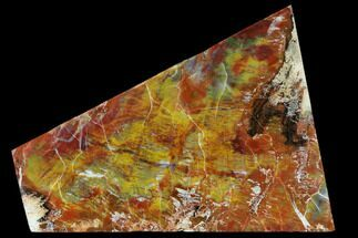 "9.2"" Polished Petrified Wood (Araucarioxylon) - Arizona For Sale, #118034"