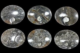 "Buy Wholesale Lot: 4.7"" Oval Dishes With Goniatite Fossils - 25 Pieces - #119335"