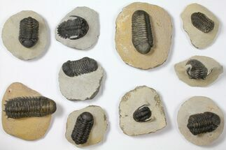 Various - Fossils For Sale - #119913