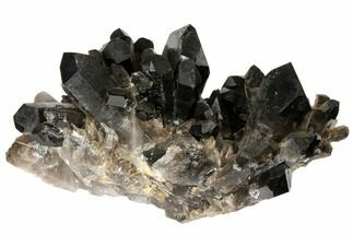 "14.2"" Smoky Quartz Crystal Cluster (23.5 lbs) - Brazil For Sale, #120467"