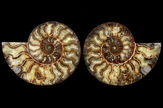 "7.3"" Agatized Ammonite Fossil (Pair) - Madagascar For Sale, #121472"