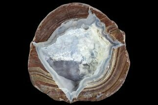 "Buy 2.96"" Crystal Filled Dugway Geode (Polished Half) - #121705"