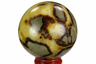 Septarian - Fossils For Sale - #122907