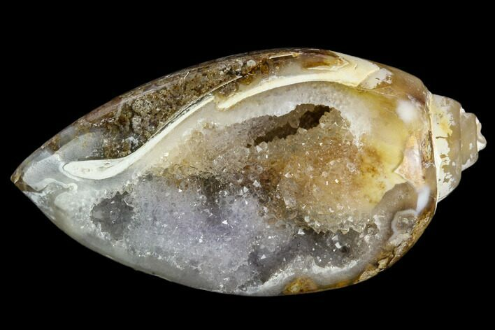 "1.65"" Chalcedony Replaced Gastropod With Druzy Quartz - India"